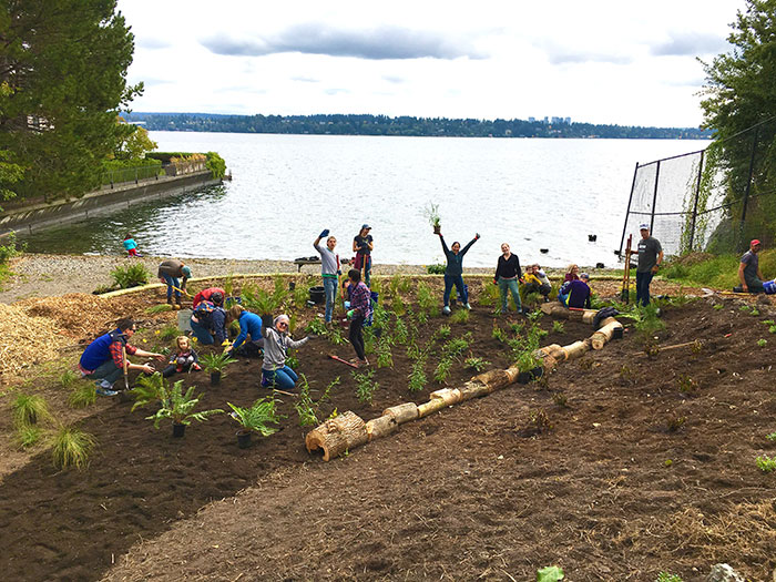 Photo courtesy of Omar Akkari: Volunteers planted 300 native shrubs at the East Prospect Street End on Oct. 5. Another planting party is set for Nov. 2.