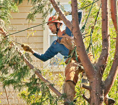 Mark Herkert, owner of Madison Park Tree, works on a tree while suspended high in the air. Photo courtesy of Eric H. Johnson