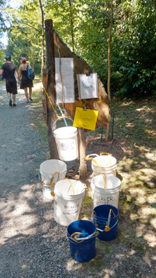 "A bevy of buckets greet visitors to the Beaver Lodge Sanctuary. Volunteers are asked to ""adopt"" a plant to water with one of the buckets once a week.  Photo courtesy of Gene Brandzel"