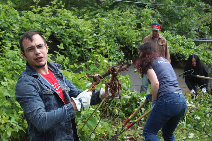 Agents with the Ben Kinney Team at Keller Williams Realty pull ivy and blackberry bushes at Leschi Park for RED Day on Thursday, May 10.
